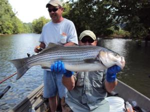 striper fishing guides